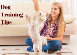 9 Top Tips How To Traing Your Dog